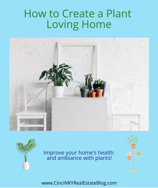 How to Create a Plant Loving Home